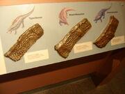 Aetosaur armor cast