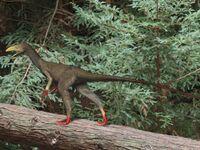Sinocalliopteryx BW