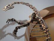 Plateosaurus ottoneum