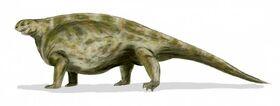 Cotylorhynchus BW