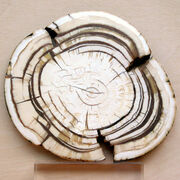 Mammoth ivory hg