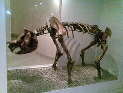 Zygomaturus tasmanicus