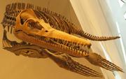 Pliosaur-ROM-Dec29-07