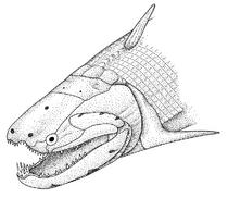 Psarolepis Big