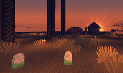 Eggs at Sunset
