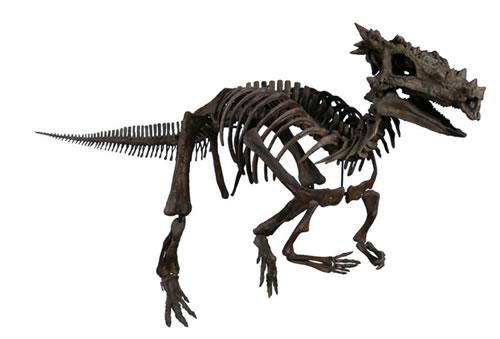 File:Pachycephalosaurus (2).jpg
