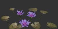 Herbal Flower - Plant