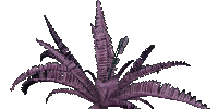 Samr Berry - Plant