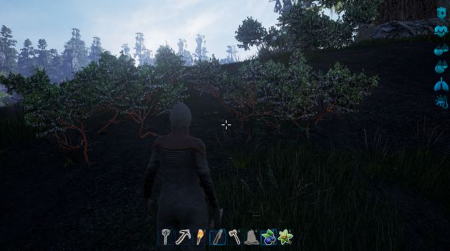 File:Ngooberry bushes.png