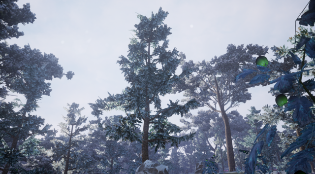 File:White Fir2.png