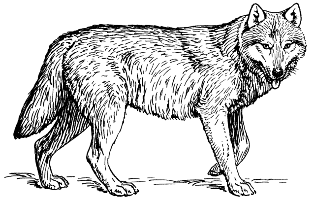 File:Wolf (PSF).png