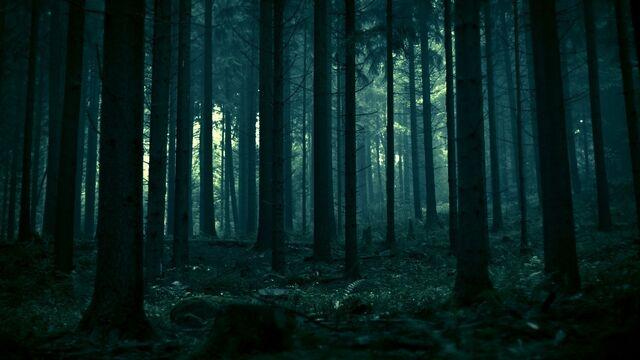 File:Dark-Forest-Wallpaper-1920x1080.jpg