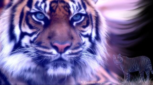 File:Fantasy-fire-tiger-wallpaper-by-greeneagle777-640x359.jpg