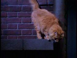 Paulo's Cat