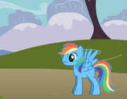 Rainbow Swift