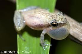 File:Baby froggo.jpg
