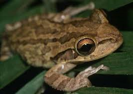 File:Frog 102.png