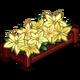 White Poinsettas-icon