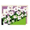 White Flowers-icon