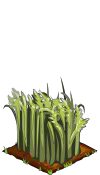 File:Wheat green.png