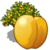 Apricot Tree-icon