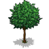 Pear Tree Big-icon