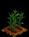 File:Corn green.png