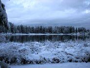 Snowy Everett