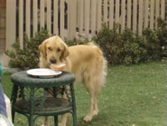 Full House S03E07 Screenshot 001