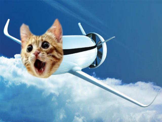 File:Catplane2030.png