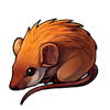 714-brown-spiny-mouse