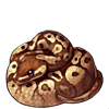 637-normal-ball-python