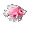 602-pink-angelfish
