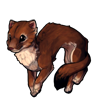 178-summer-ferret