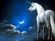 The-lost-unicorn-part-1-21437467