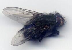 FlyAsymmetric