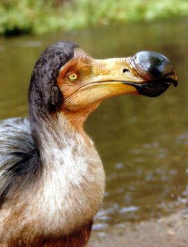 DodoBird