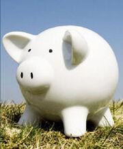 Piggy3 small