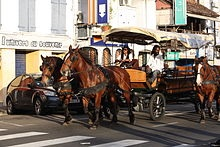 File:Martinique horse chariots.jpg