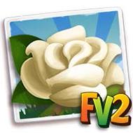 White Rose Crop