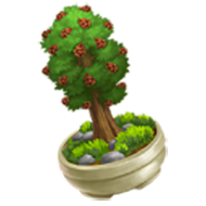 Coastal Redwood Bonsai
