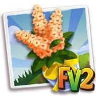 Orange Cassia Bouquet
