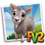 Toggenburg Mini Goat