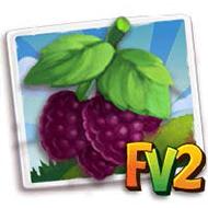 Boysenberry Crop