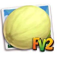 Honeydew Melon Crop