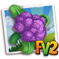 Purple Sprouting Broccoli Crop