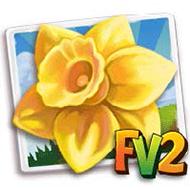 Cameo Jewel Daffodil Crop