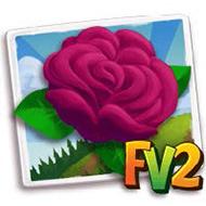 English Rose Crop