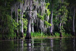 Swamp-169168 960 720