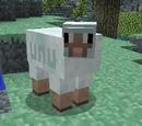 That Bally Sheepie